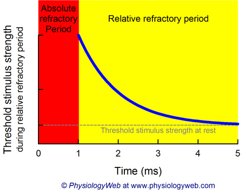 threshold_stimulus_during_relative_refractory_period